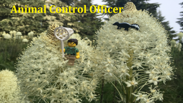 What is Animal Control Officer Job Description